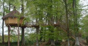Cabane des sous bois vue de profil début de feuilles
