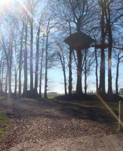 Chemin accès cabane champetre