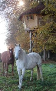 accueil chevaux