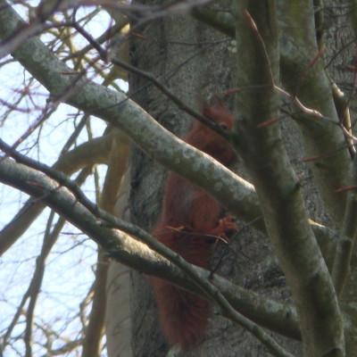 ecureuil-cabanes-clos-masure-002