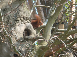 ecureuil-cabanes-clos-masure-003